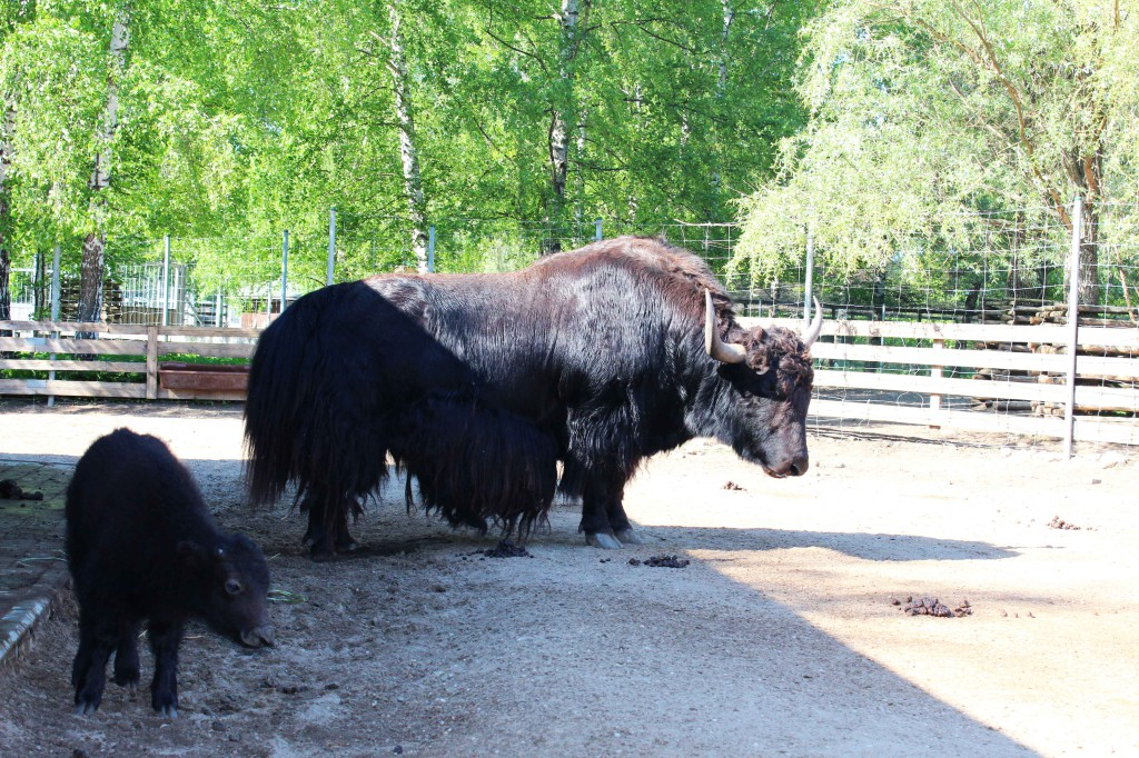 Väike La varasuvel koos isaga Tallinna loomaaias