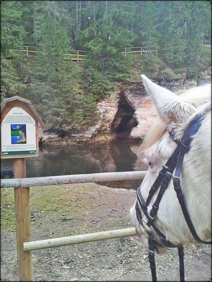 Mustamõisa eesti hobune Tiibet Taevaskojas Neitsikoopa ees