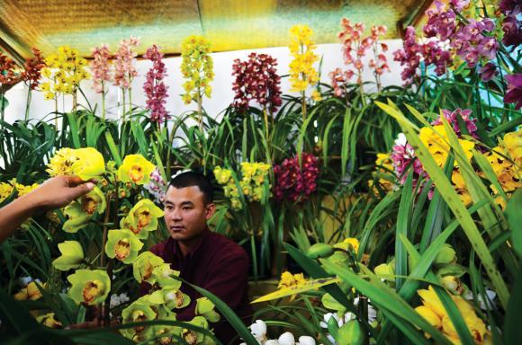 Sikkimi orhideed lillenäitusel. Foto: rediff.com