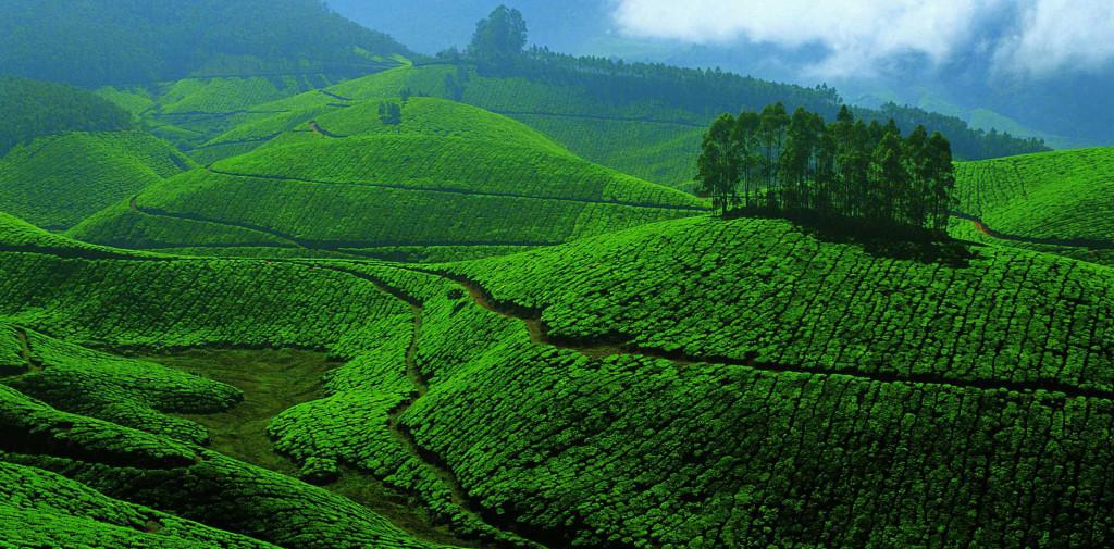 Munnari mäed. Foto: Kerala.com